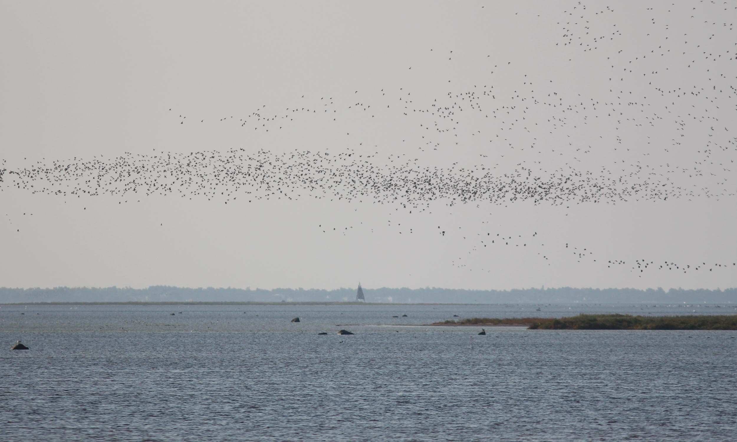 Birdwaching-Norway-birdmigration
