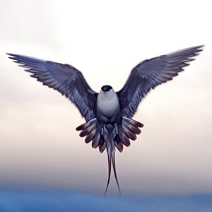 Birding tour in Varanger, Norway